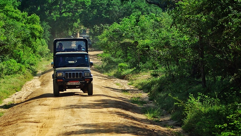Travel tips for Yala National Park Sri Lanka Safari