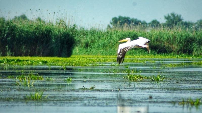 Visit Danube Delta pelican canal