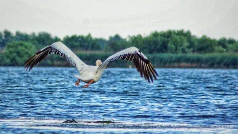 Tours in Romania Visit Danube Delta beautiful Romania