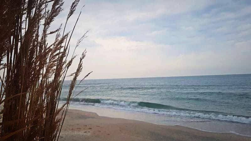 Beautiful wild beaches in Romania