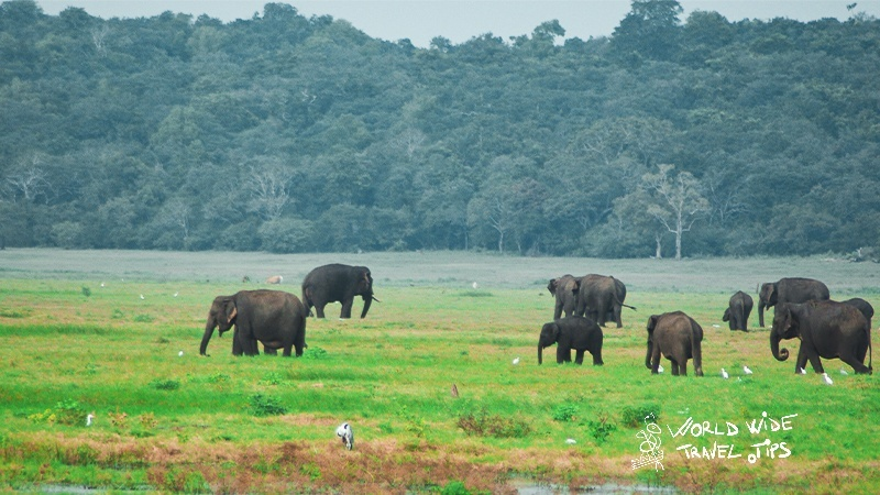 Udawalawe National Park Sri Lanka Elephants