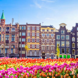 Best time to visit Amsterdam for tulips in 2020