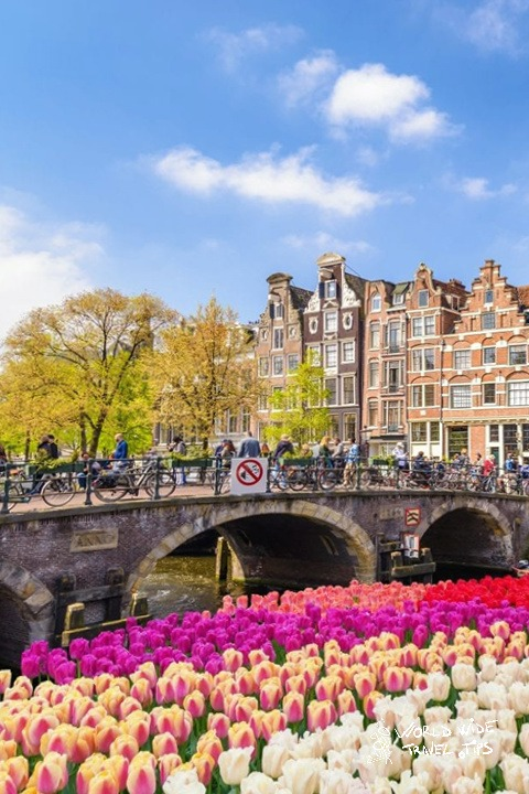 Holland Tulips in Amsterdam