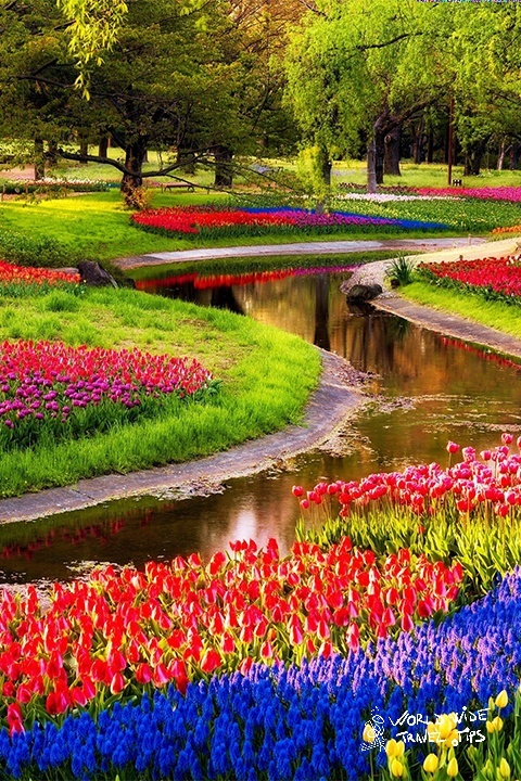 Keukenhof Garden Best time to visit Netherlands