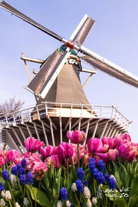 Kuekenhof Garden Tulips windmill Amsterdam Holland