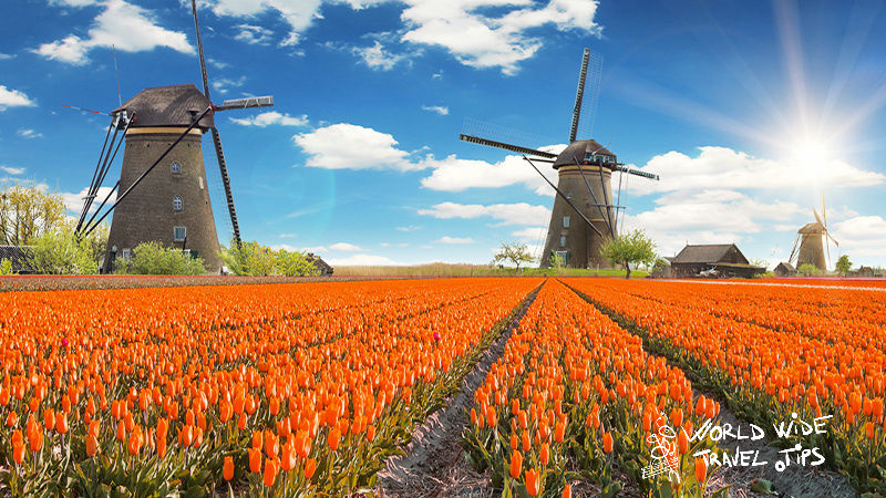 Netherlands Tulip fields Amsterdam
