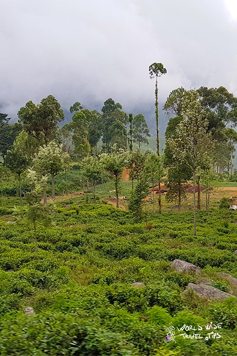 Nuwara Eliya Sri Lanka best places to visit in winter in Sri Lanka