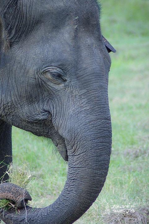 Ultimate guide to Minneriya National Park Sri Lanka Elephant