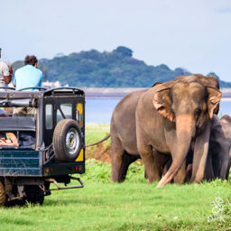 Yala National Park Sri Lanka Elephants best places to visit in winter in Sri Lanka