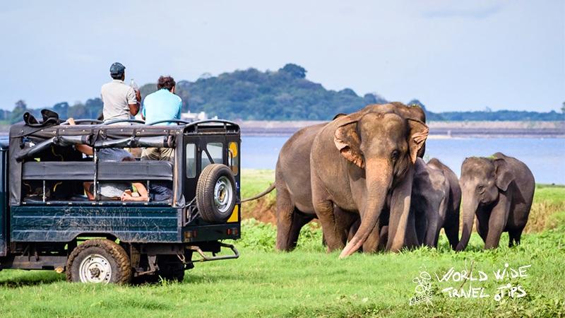 Yala National Park Sri Lanka Elephants best places to visit in winter in Sri Lanka