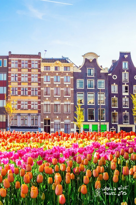 visit Amsterdam for tulips 2020