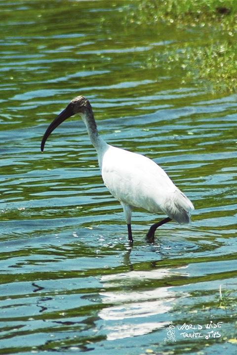 Bird watching Yala National Park