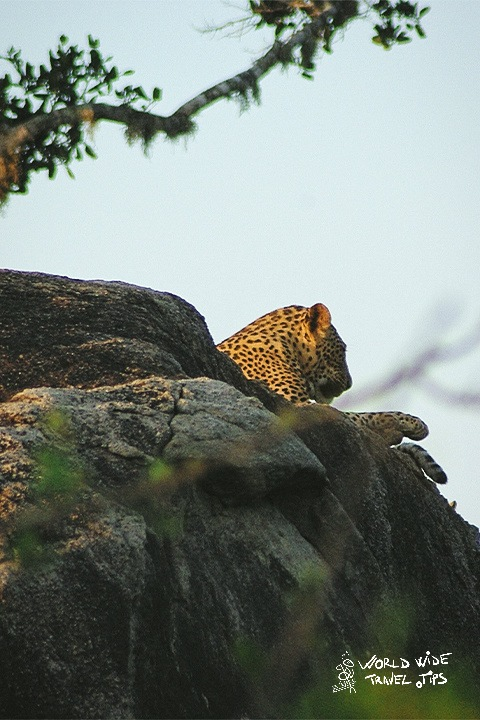 Leopard in Yala Sri Lanka