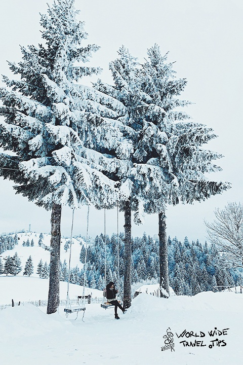 Romania Tree with snow swing
