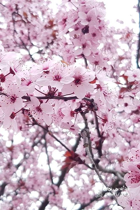 Spring Transylvania flowers