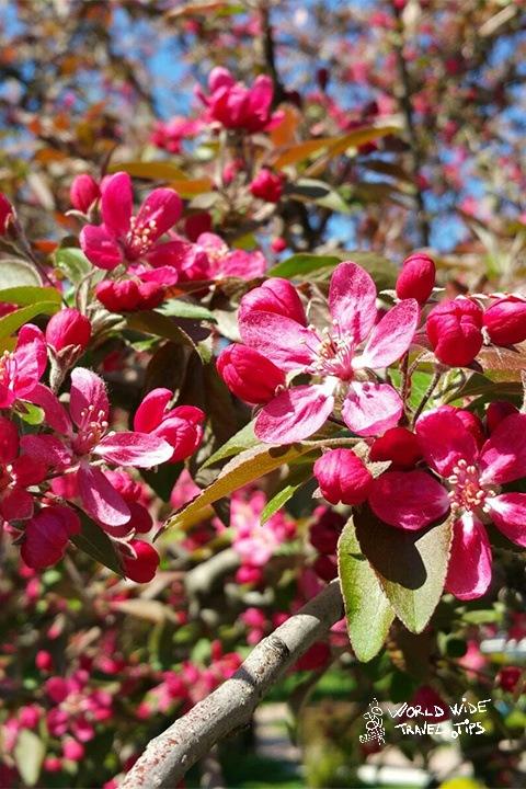 Spring in Transylvania