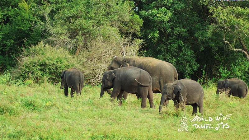 Best period for safari in Sri Lanka