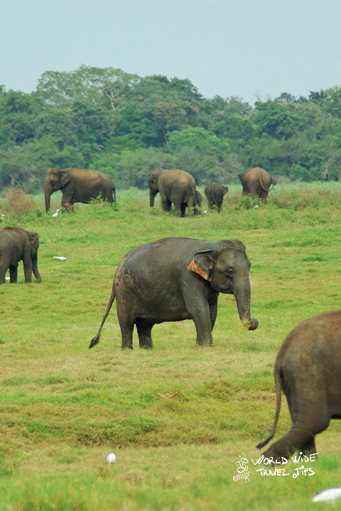 Best time for Safari in Sri Lanka
