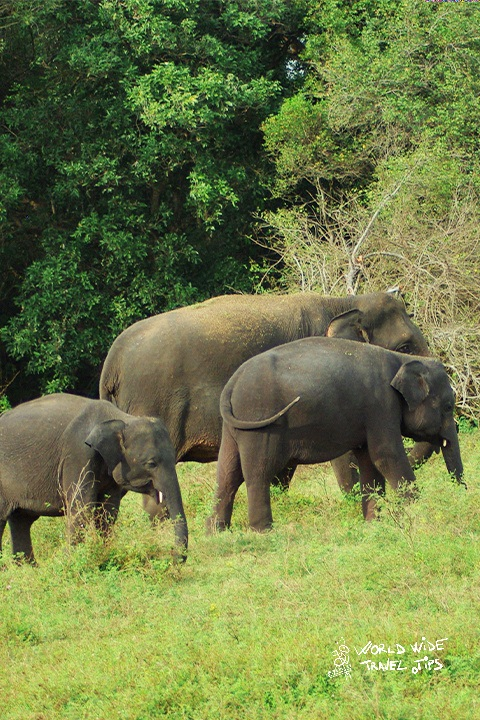 Best time for Sri Lanka Safari