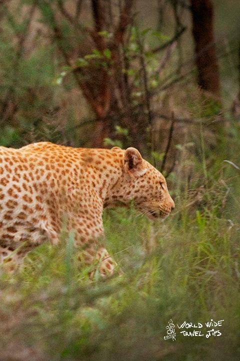Leopard Safari in Sri Lanka