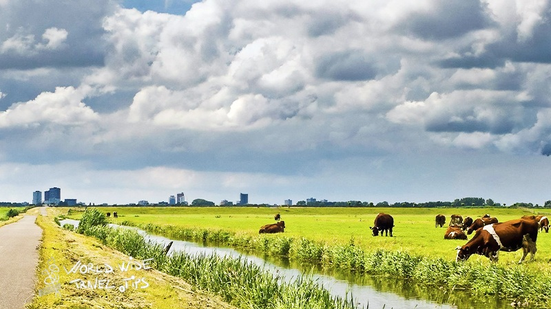 Travel tips to visit Netherlands in June