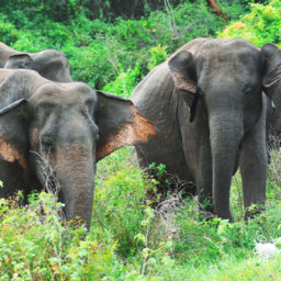 Sri Lanka National Park Elephant Safari