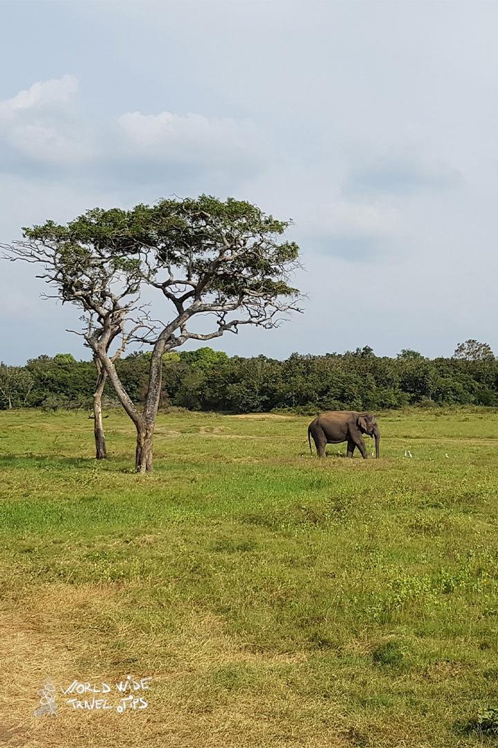 Udawalawe National Park Sri Lanka National Parks