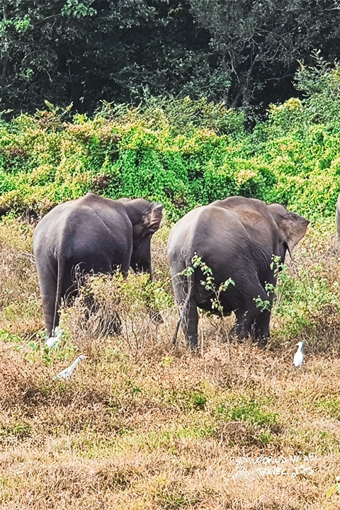 Udawalawe Sri Lanka Safari Elephant