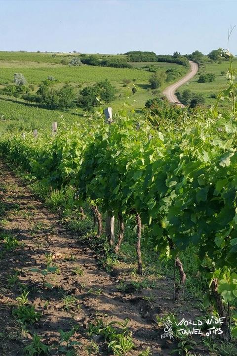 Romania wineyard countryside