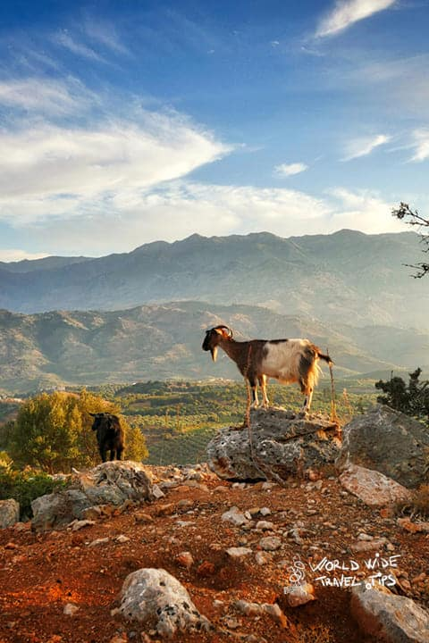Crete Greece Landscape Goat sunset