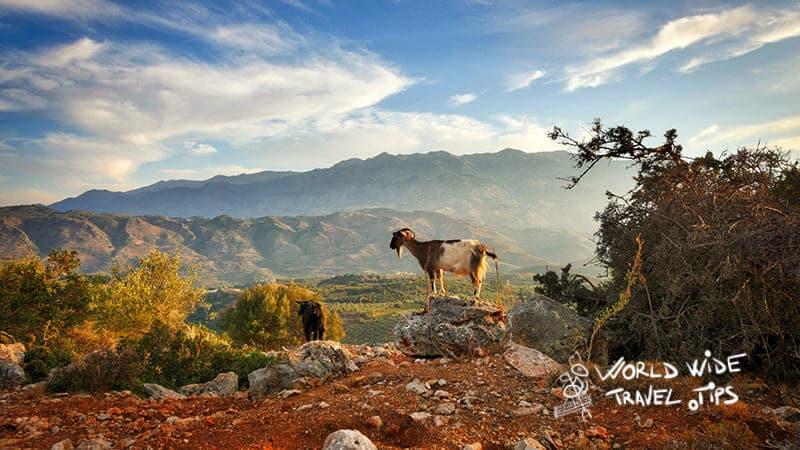 Crete Greece Landscape Goat sunset Greek islands with sandy beaches