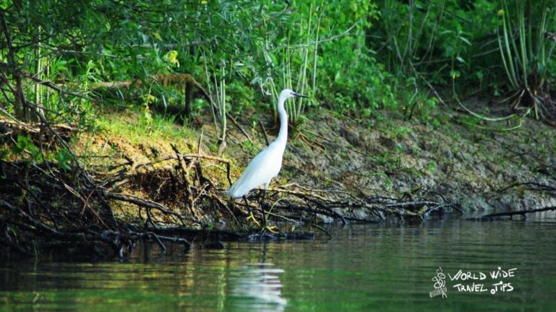 Danube Delta Bird Romania