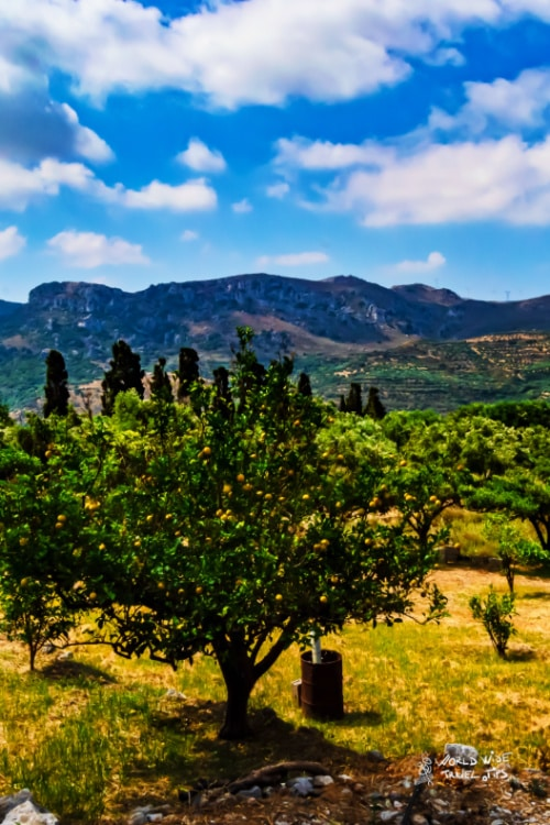Lemon trees facing the mountains Crete Greece