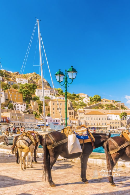 Donkey Transport Hydra Island Saronic Greece Greek Islands