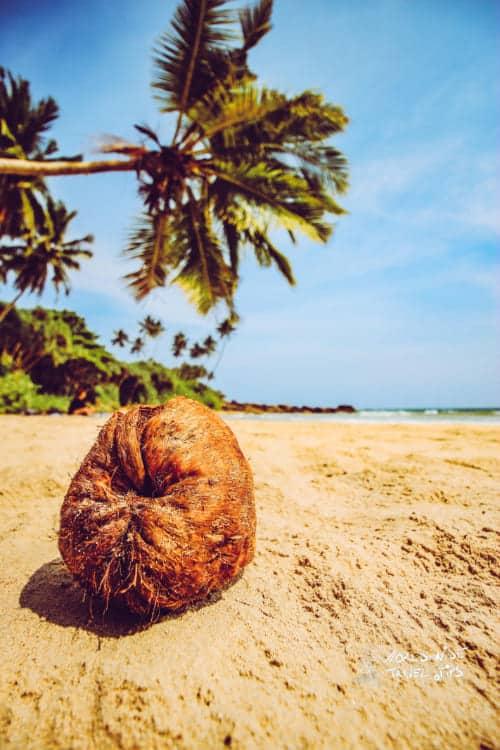 Galle Sri Lanka coconut