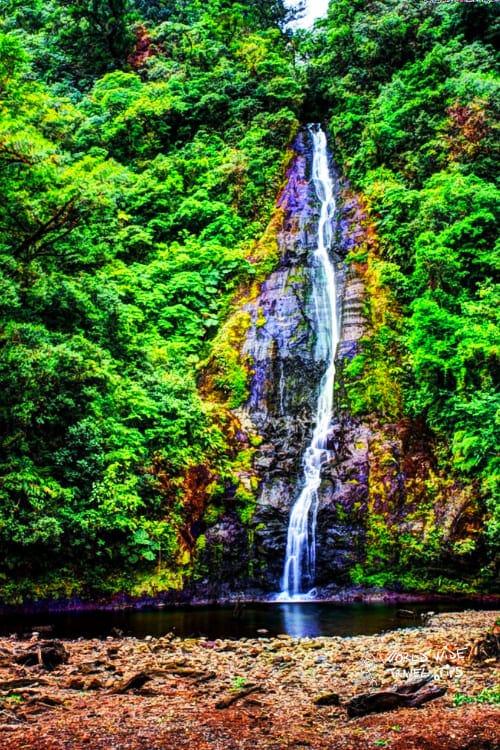 Bajos Del Toro Costa Rica Cloud Forest