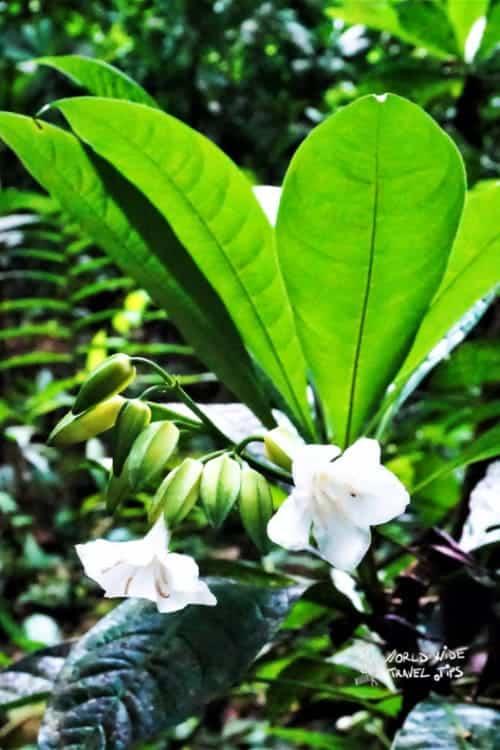 Carara National Park plant Costa Rica rainforest