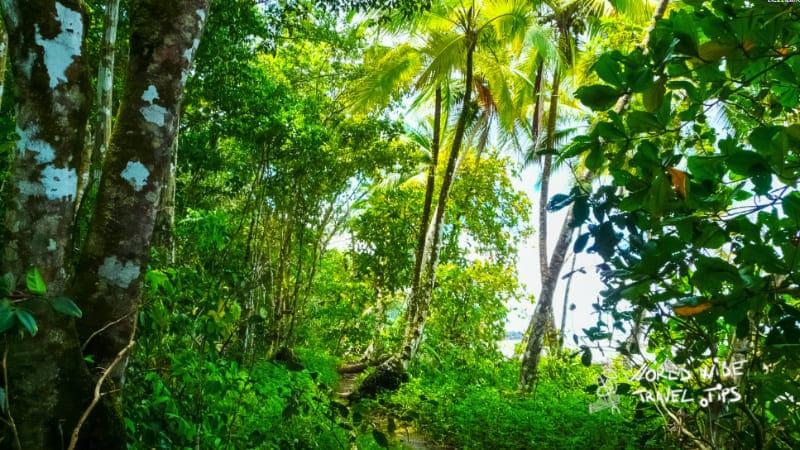 Corcovado National Park Osa Peninsula in Costa Rica rainforest