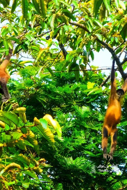 Costa Rica Rainforest Tortuguero National Park