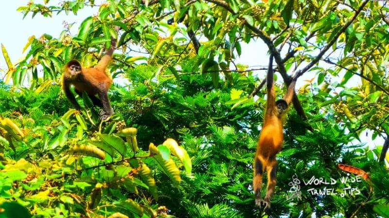 Rainforest Tortuguero National Park Costa Rica