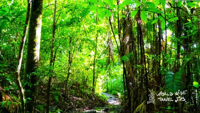 Manuel Antonio Costa Rica National Park rainforest