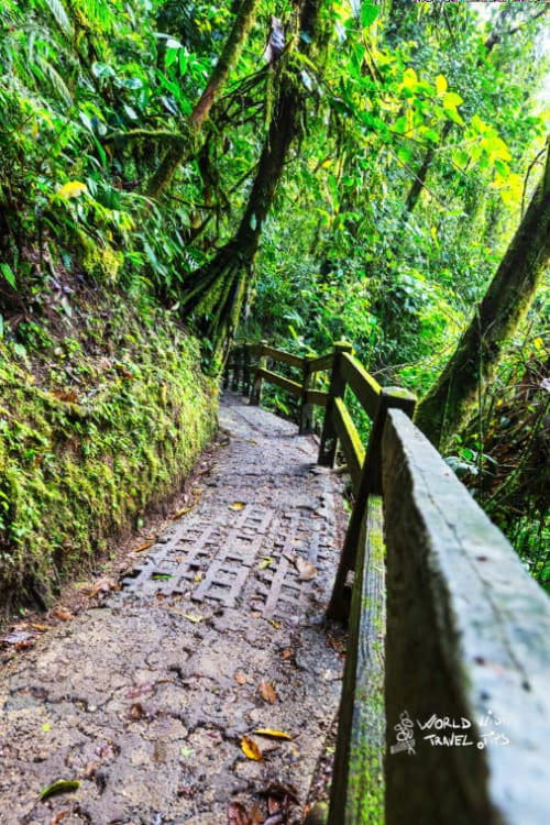 Hike in Arenal National Park Costa Rica