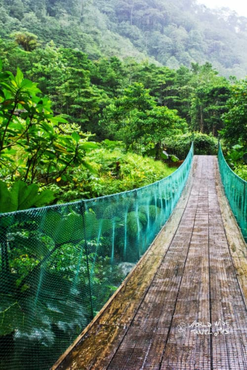 Los Angeles cloud forest Costa Rica