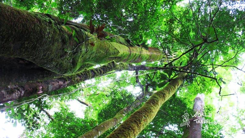 Piedras Blancas National Park Costa Rica Rainforest