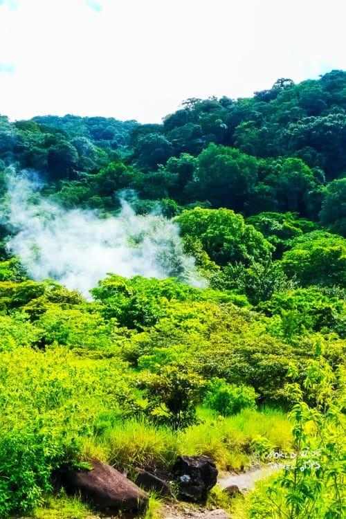 Rincon de la Vieja National Park Trees