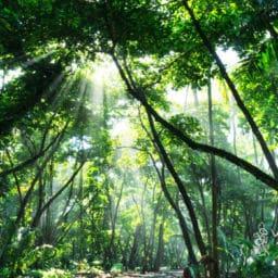 Cloud forest in Costa Rica