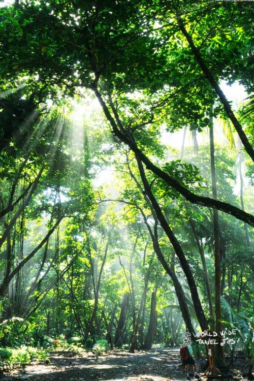 Sun Rays Shine Through Jungle Rainforest in Corcovado National Park Costa Rica