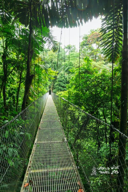 Suspended bridge in cloud forest Costa Rica