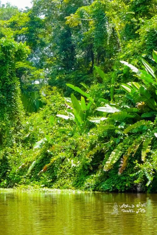 Tortuguero National Park Costa Rica Rainforest
