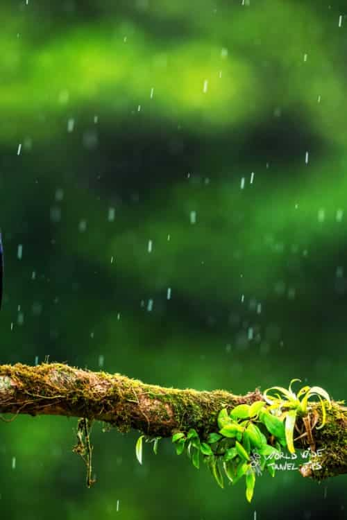 Best time to visit in Costa Rica Rainy Season